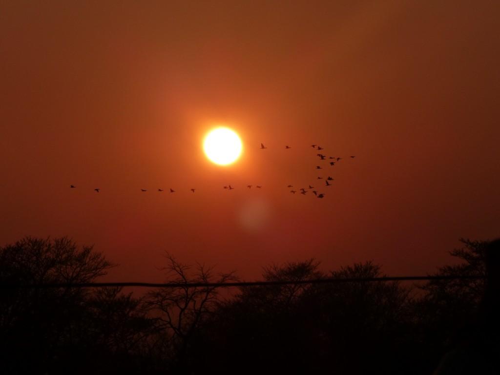 Sonnenuntergang in Chitwan