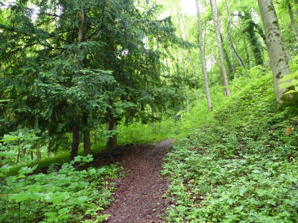 Paterzeller Eibenwald
