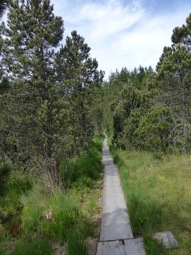 Brettleweg durchs Moor