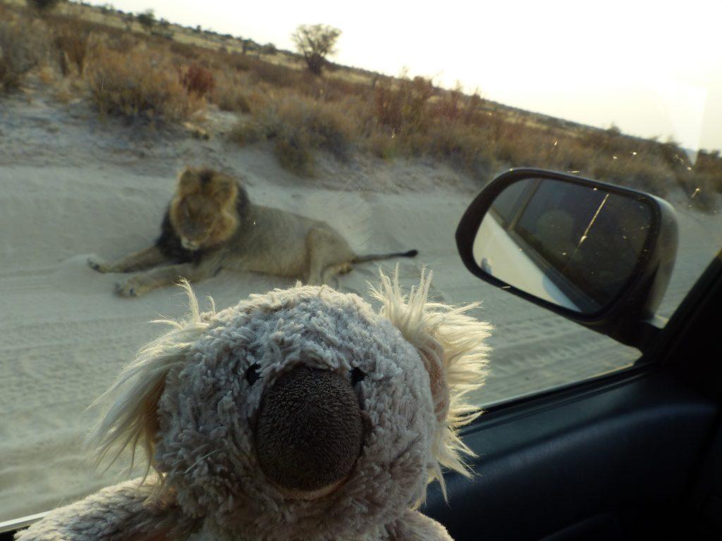 Karl mit Löwe