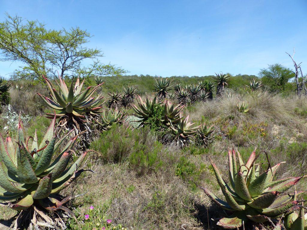 Wanderung Aloe Hill Trail